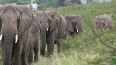 Ki tudja ezt megmagyarázni? 31 elefánt jött meggyászolni a férfit.
