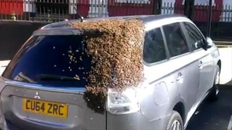 Egy méh berepült a nő kocsijába. De ami ezután történt, az horrorisztikus!