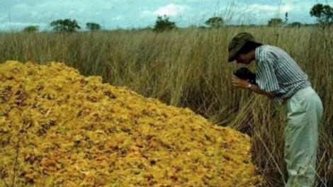 Egy üdítőitalokat gyártó cég 16 éven keresztül egy letarolt helyre hordta a narancshéjat. Ez lett az eredménye!